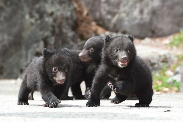 【最大22%割引】奥飛騨クマ牧場 クーポン(入場+熊のエサ)