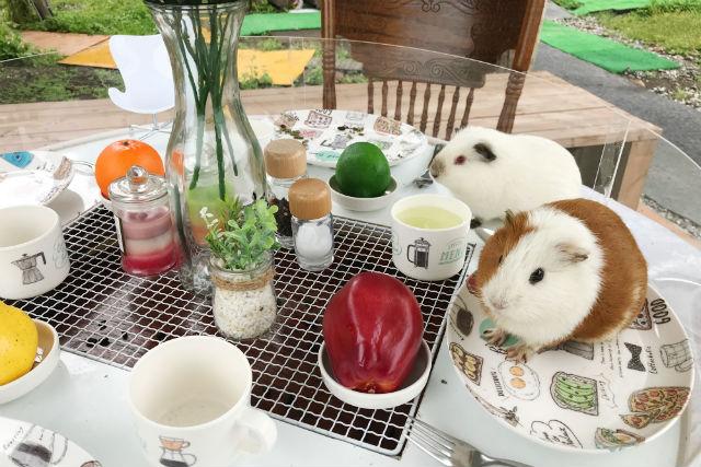 【50円割引】八ヶ岳アルパカ牧場 クーポン(入園+ソフトクリーム割引)