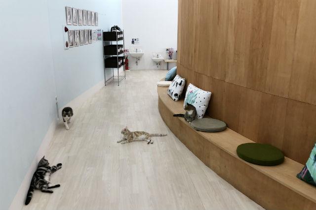 【特典付クーポン】Moff animal cafe 水戸オーパ店
