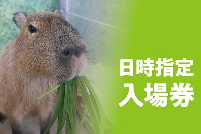 新江ノ島水族館 日時指定入場券