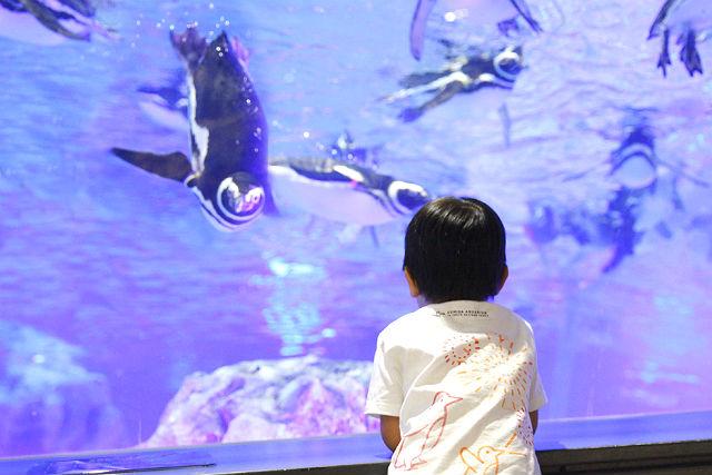 【2.5%還元】すみだ水族館 日時指定チケット  ※各回の入場開始時間は混雑が予想されます。