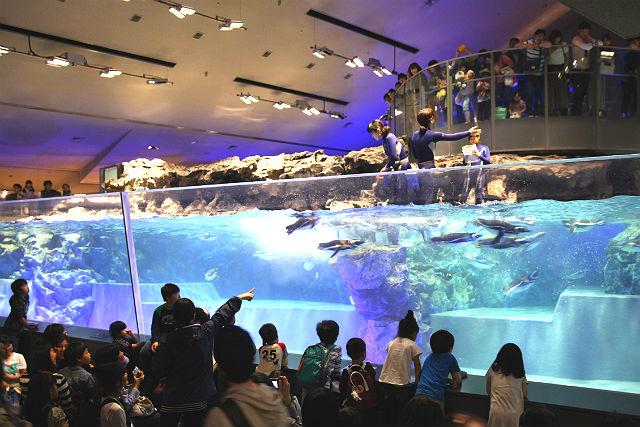 すみだ水族館 日時指定チケット  ※各回の入場開始時間は混雑が予想されます。