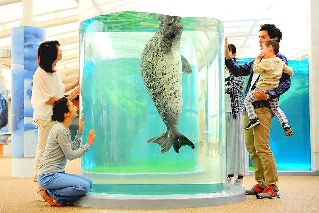 京都水族館 日時指定チケット ※15時以降は特典付き ※各回の入場開始時間は混雑が予想されます