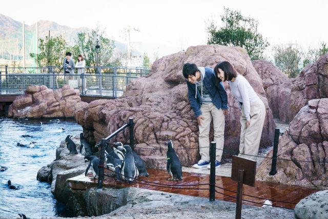 上越市立水族博物館 うみがたり 購入窓口に並ばずに入場できる 前売りチケット