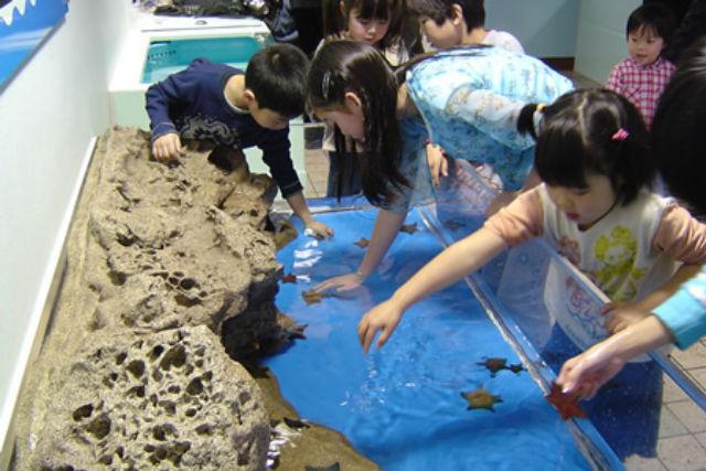 【200円割引】越前松島水族館 クーポン(入館)