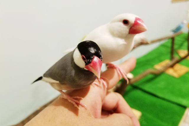 【特典付クーポン】Moff animal cafe MARKIS 福岡ももち店(入場+ドリンクバー)
