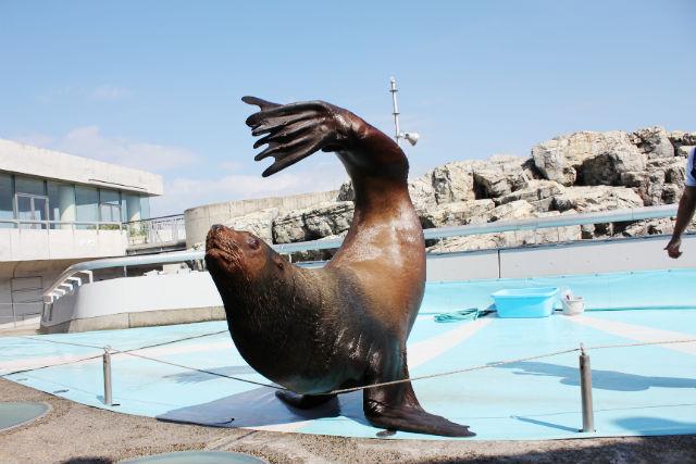 【最大100円割引】大分マリーンパレス水族館 「うみたまご」 WEBチケット(入館)