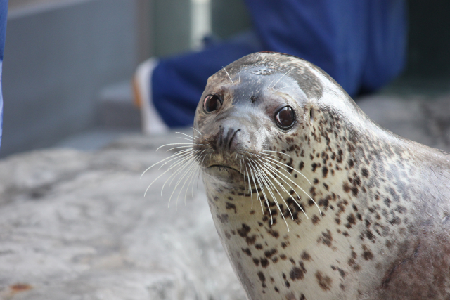 【最大25%割引】男鹿水族館GAO 入館クーポン