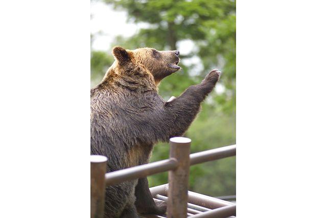 【最大250円割引】のぼりべつクマ牧場 入園券