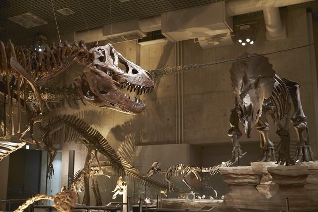 【施設HPより要日時指定予約】国立科学博物館 前売り電子入館チケット(常設展)