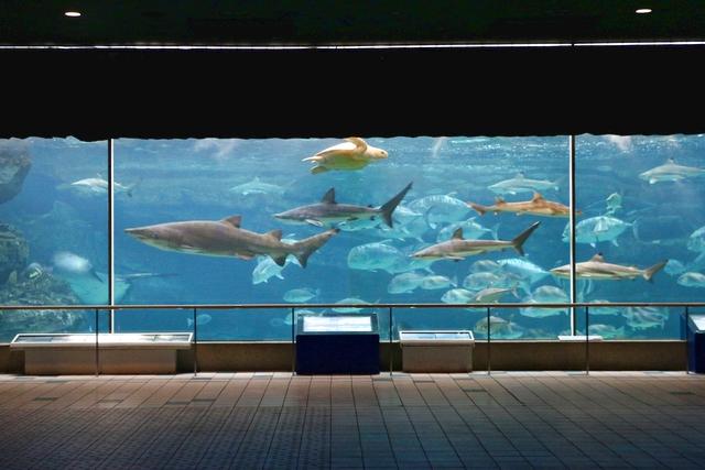 【最大200円割引】須磨海浜水族園 2021年WEB限定セット券(入園券+500円分利用券)