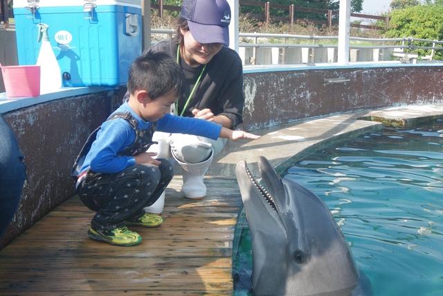 南知多ビーチランド 「イルカにエサをあげよう」※別途入園料必要