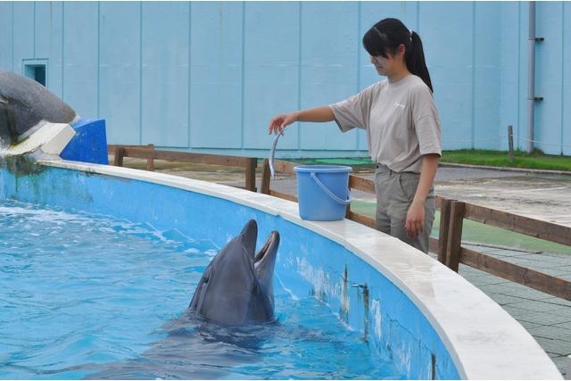 【10月~】南知多ビーチランド【10/2~イルカにエサをあげよう】※別途入園料必要