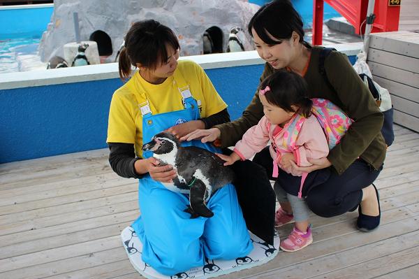 【10月~】南知多ビーチランド【10/1~もっとペンギンにタッチ】※別途入園料必要
