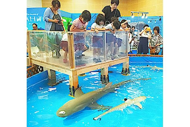 【200円割引】SANKO夢みなとタワー「沖縄の海とサンゴ礁の水族館」前売り電子チケット