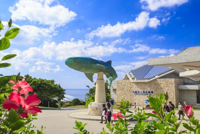 沖縄美ら海水族館 16時からWEBチケット(16:00~入館締切まで利用可)