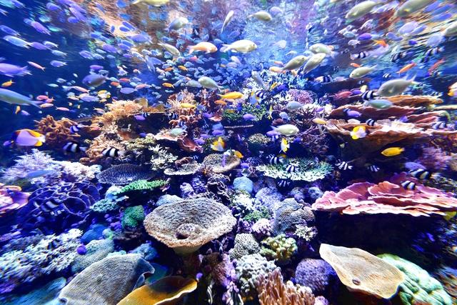 D【土日祝予約制・1週間前から予約可】名古屋港水族館 整理券(予約のみ)